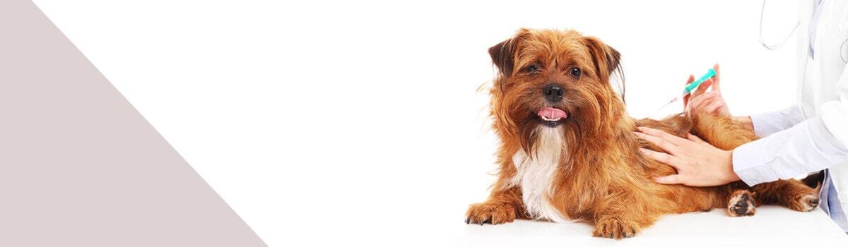 clubvet-çekmeköy-veteriner-kliniği-aşı-uygulaması-min