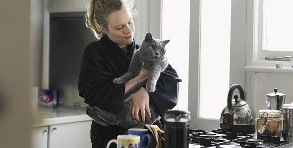 kedi kısırlaştırma fiyatları