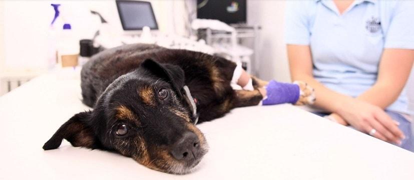 evcil-hayvanlar-kedi-köpek-ozon-tedavisi