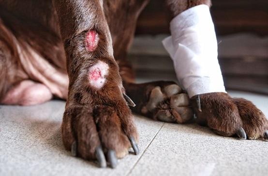 kedi-köpek-hayvanlar-için-ozon-tedavisi