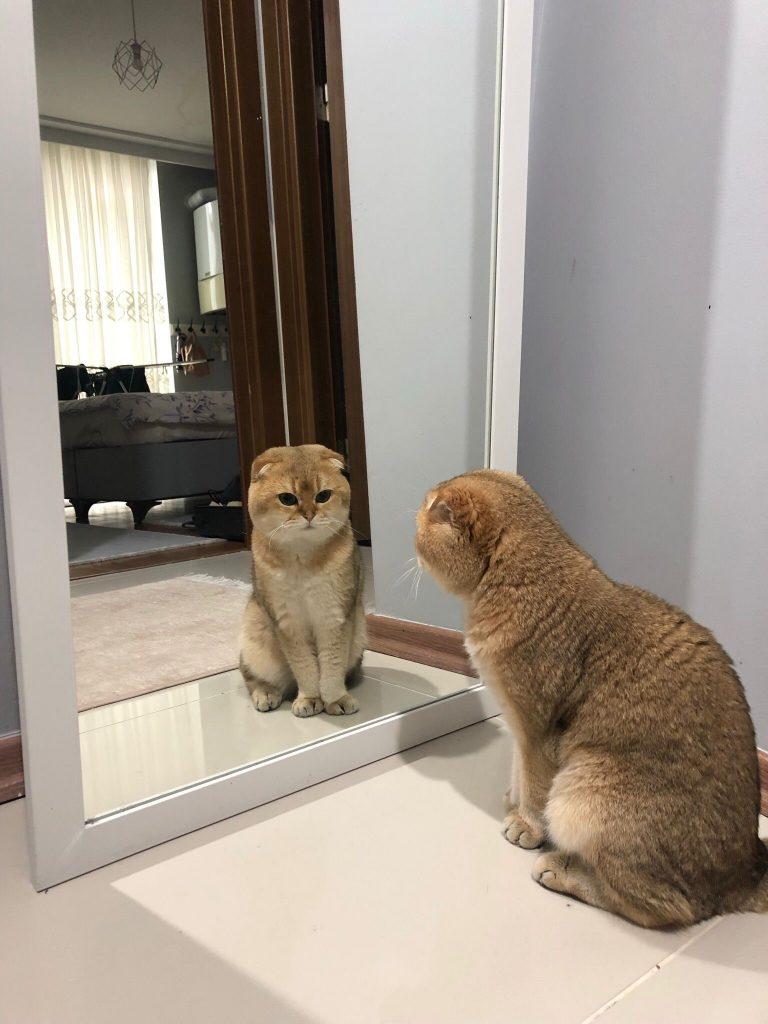 kedilerde davranış bozuklukları, bölgecilik, saldırganlık, yavru kedilerde sosyalleşme